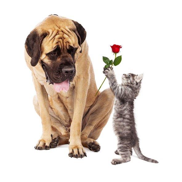 Kitten Handing Big Dog a Rose