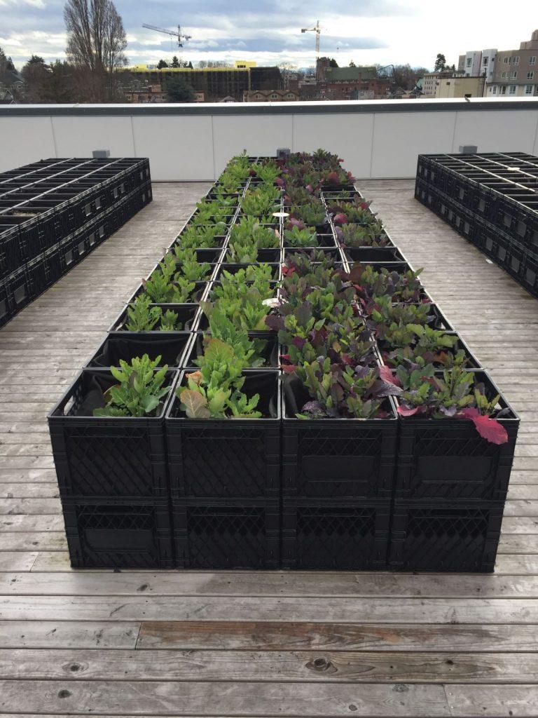 University Food Bank roof garden
