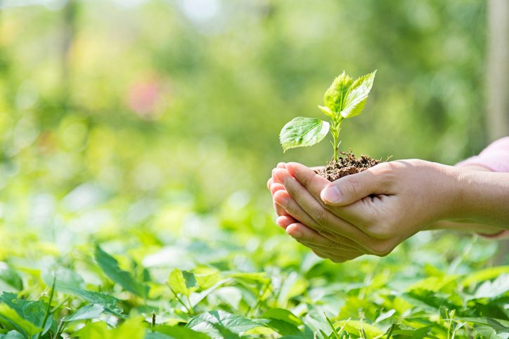 Woman's hands holding seedling