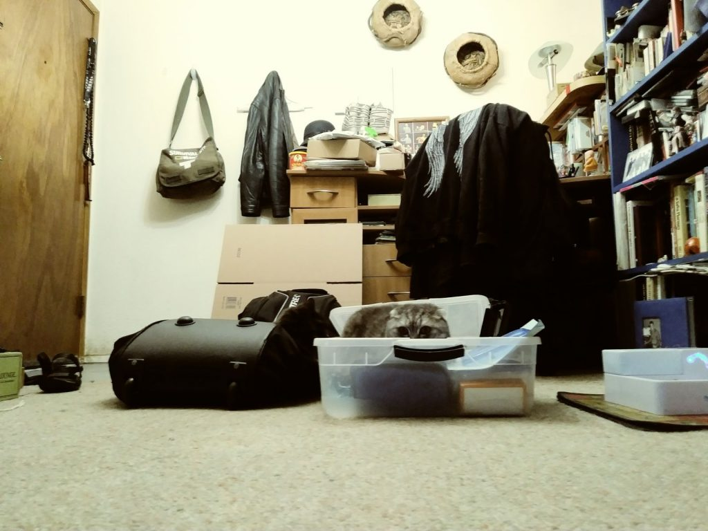 Cats in Casual Uncluttering work gear