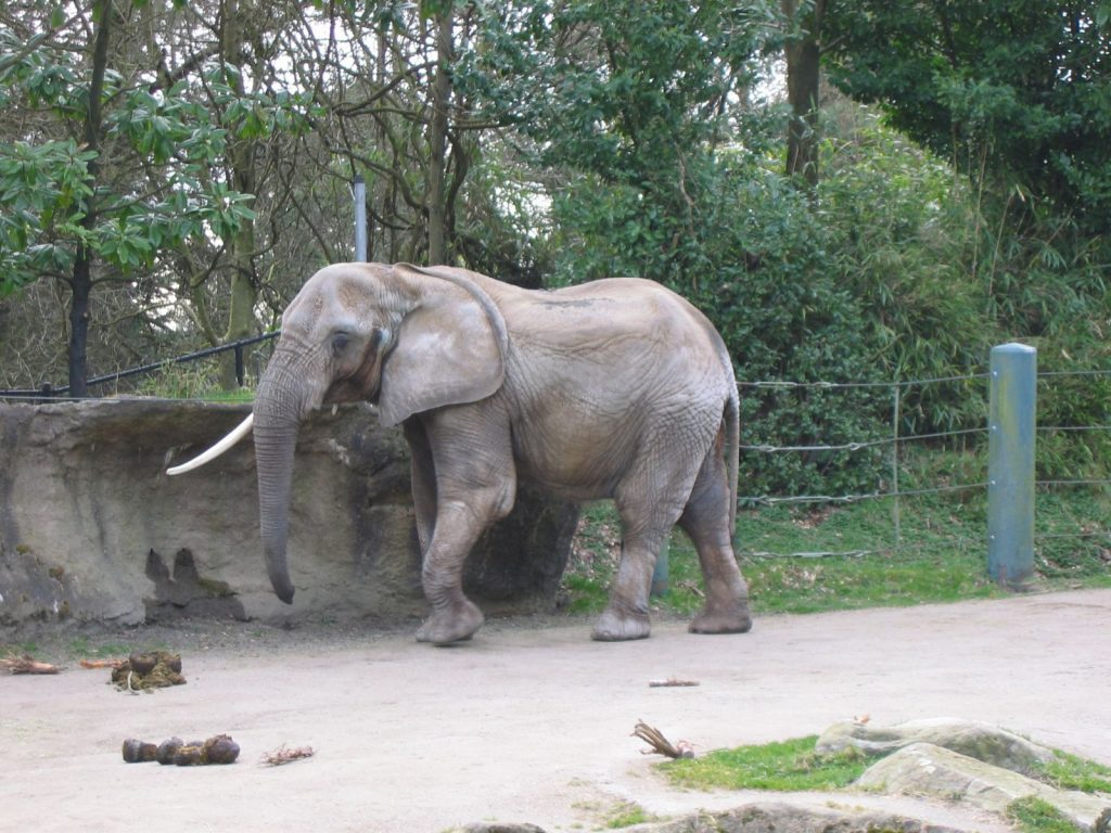 Elephant at Woodland Park Zoo